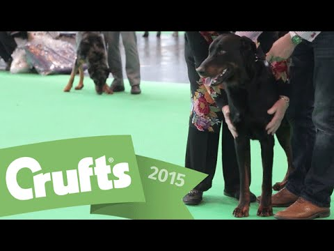 Breed Classification - Best of Beauceron and winner's interview  | Crufts 2015