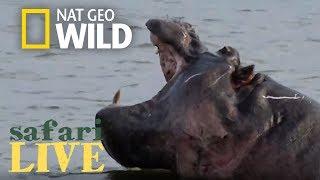 Safari Live - Day 119 | Nat Geo Wild by Nat Geo WILD