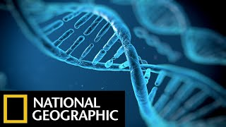 Video DNA Genesis - The Children Of Adam - National Geographic Documentary Films - Full HD Documentaries MP3, 3GP, MP4, WEBM, AVI, FLV Mei 2018