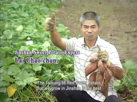 The Great Taste of Jinshan Sweet Potatoes