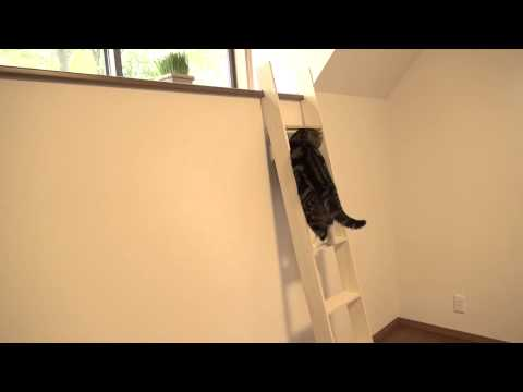 maru - 梯子を登るまる。Maru climbs the ladder. Hana cannot yet climb the ladder.