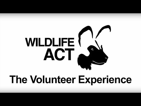 The volunteer experience with Wildlife ACT