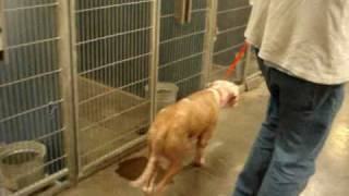 The story of Max the shelter dog.wmv