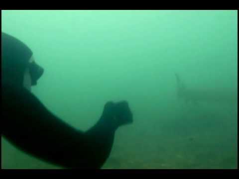 Un plongeur attrape un esturgeon avec ses mains !