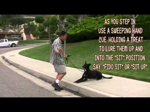 Dog Training -Down To Sit- (видео)