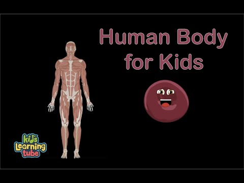 Human Body Systems for Kids/Human Anatomy for kids/Human Anatomy Systems for kids
