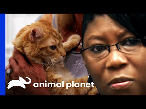 """Woman With """"Cat Phobia"""" Pets Cat For The First Time 