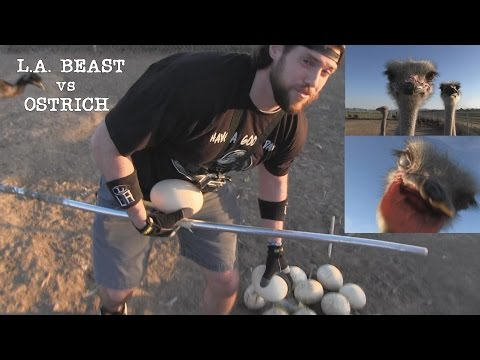 Video What Happens When A Human Tries to Steal Eggs From An Ostrich Nest | Ft. L.A. BEAST download in MP3, 3GP, MP4, WEBM, AVI, FLV January 2017