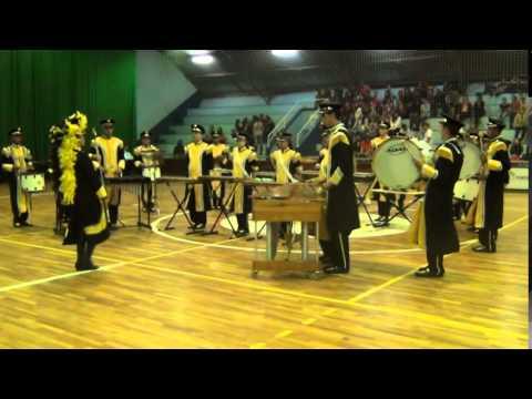 Associação Musical Almirante Tamandaré - Animals