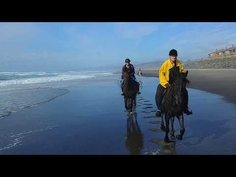 Cantering on an Oregon Beach