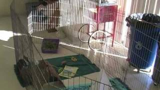 What Shelter and Food Does Your Bunny Need? A Video by the Marin Humane Society