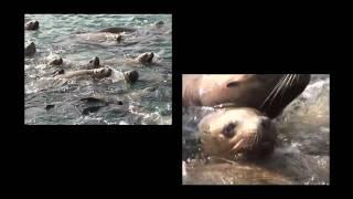Alaska Wildlife with Cove Lodge in Elfin Cove