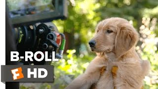 Nonton A Dog's Purpose B-ROLL (2017) - Josh Gad Movie Film Subtitle Indonesia Streaming Movie Download