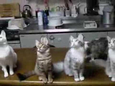 「[ネコ]BGMに合わせて、ノリノリの首振りを見せる猫がいっぱい。」のイメージ