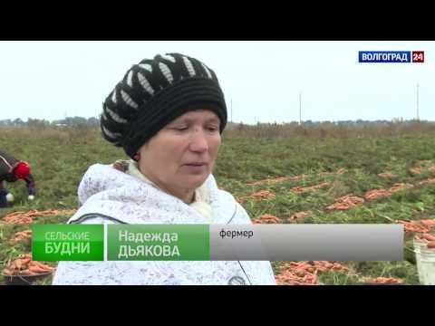 Городищенский район. Выпуск от 21.11.2016