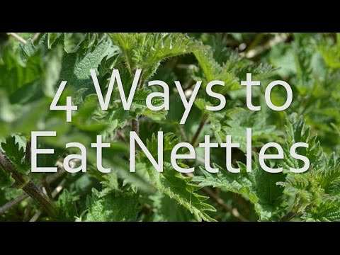 Eat Nettles - 4 Different Ways