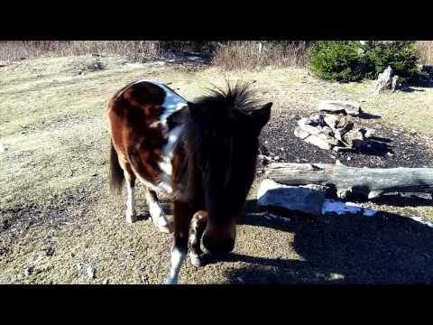 Licked By Virginia Pony. Appalachian Trail Thru Hike NorthBound. 2017