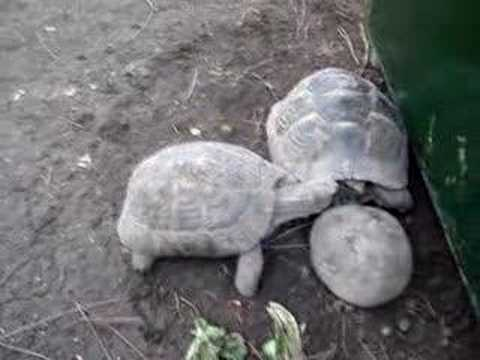 Turtle Bully