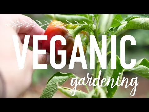 Everything You Should Know About Organic Gardening