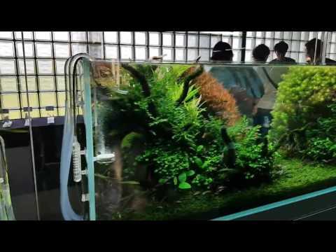 ADA Nature Aquarium Party 2016 (видео)
