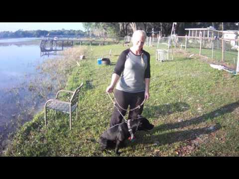 Knee HemiCAP Patient loses 100 lbs!