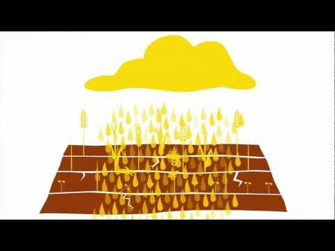 food system - This animated story journeys through the broken food system and then looks at the transformation that is already underway to bring about change. It brings it...