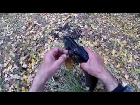 Ловля плотвы на мормышку и щуки на жерлицы по последнему льду. Видео отчет от 14.04.2015 г.