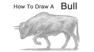 Видео: как нарисовать быка карандашом