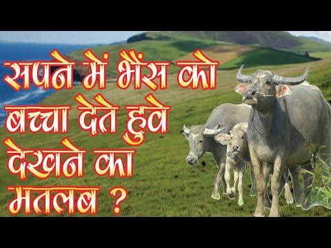 Sapne Mein Bhains Ko bachcha dete Hue dekhne ka matlab - Surendra Mishra (Purohit Jee) - SSJK NEWS