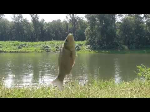 рыбалка на днестре сегодня 2016 видео в маяках