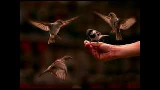 This is song on a sparrow. A kid requests sparrow to come and play with it. Child describes sparrow in a cute manner. Check the video and enjoy the song.