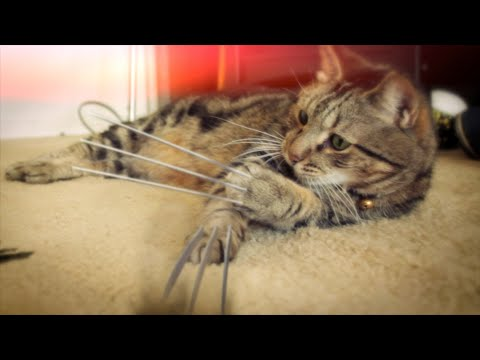 X Men Origins: Wolverine - This Lil X-Men feline's Adamantium claws get in the way. Created by: Kaipo Jones Camera: Rory O'Donnell http://www.rorypodonnell.com Audio: Luke Bechthold ht...
