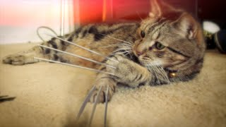 X-Men Origins : Wolverine Cat