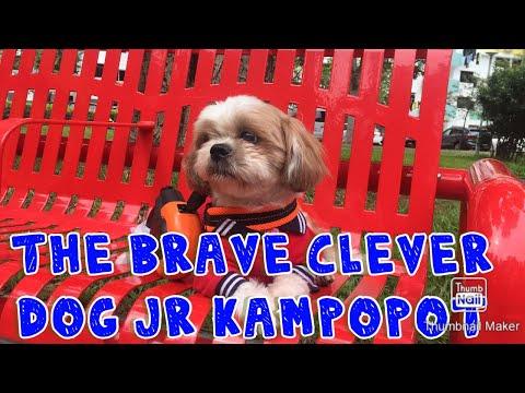 #slomoni#kampopotbibodog THE CLEVER ACTIVE DOG 🐶 MOVIE 14/72020 PUTTING GODFIRST ALWAYS ☝️🙏💖😘