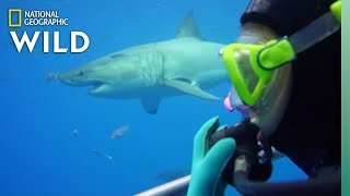 How Scientists Study Sharks | Nat Geo Wild by Nat Geo WILD