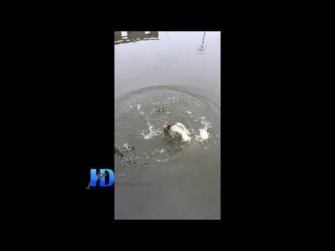 ►[Đồ Câu Hải Đăng]Câu cá trắm đen tại Thái Bình