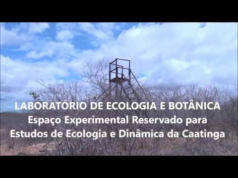 - Centro de Desenvolvimento Sustentável do Semiárido