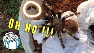Video Tarantula Unboxing ~ SHE BROKE HER LEG ?!!  :( MP3, 3GP, MP4, WEBM, AVI, FLV Mei 2018