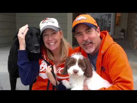 Dogs In Broncos Gear