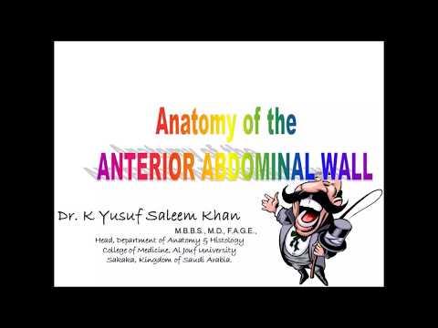 Anatomy of ANTERIOR ABDOMINAL WALL (Part 1)