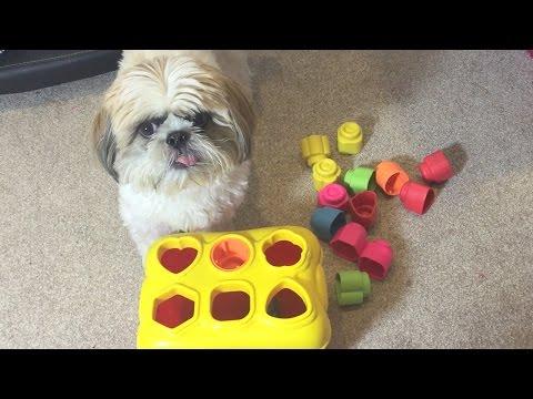 mette dei giocattoli di fronte al cane: non immaginerete quello che fa!