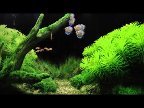 digital living room - Why have a real tank, when you can have a digital one? LOL. Kidding aside, here is a short video of my Dream Aquariums set up on our big screen tv, and two m...