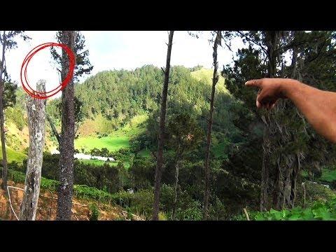 best ufo sightings! must see this video!