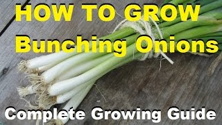 How To Grow Bunching Onions - Complete Growing Guide