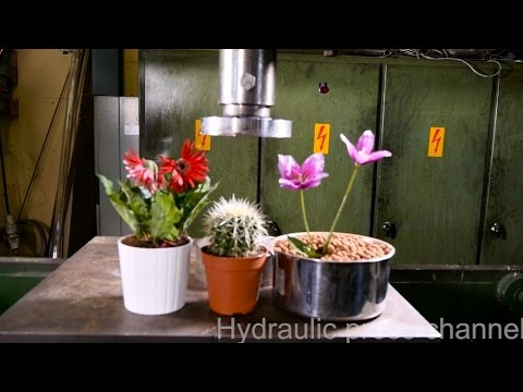 Crushing Flowers And Cactus With Hydraulic Press