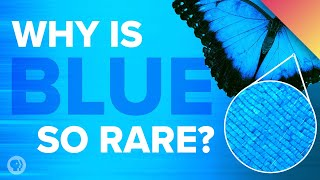 Video Why Is Blue So Rare In Nature? MP3, 3GP, MP4, WEBM, AVI, FLV Desember 2018