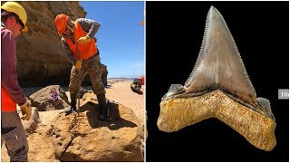 Video An Australian Scientist Found A Tooth So Big That It's Hard To Believe This Monster Actually Existed MP3, 3GP, MP4, WEBM, AVI, FLV November 2018