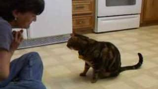 Cat Does Dog Tricks - Lmao!