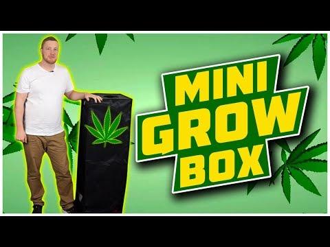 Mini Cannabis Grow Box with Harvest and WeedPics