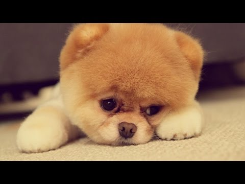 Cute Puppies Doing Super Funny Things - Check it Out (VIDEO)